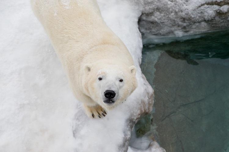 Habitat closure announcement took board 'a little bit by surprise' - My Timmins Now